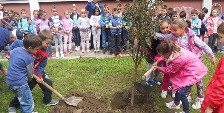 """ЈКП """"Градско зеленило"""" донирало стабла основној школи"""