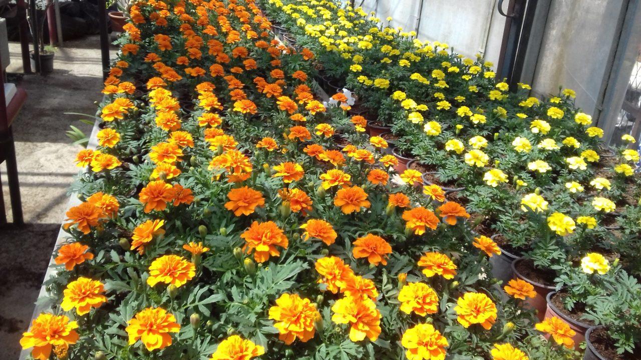 Како сачувати собно цвеће за време годишњих одмора