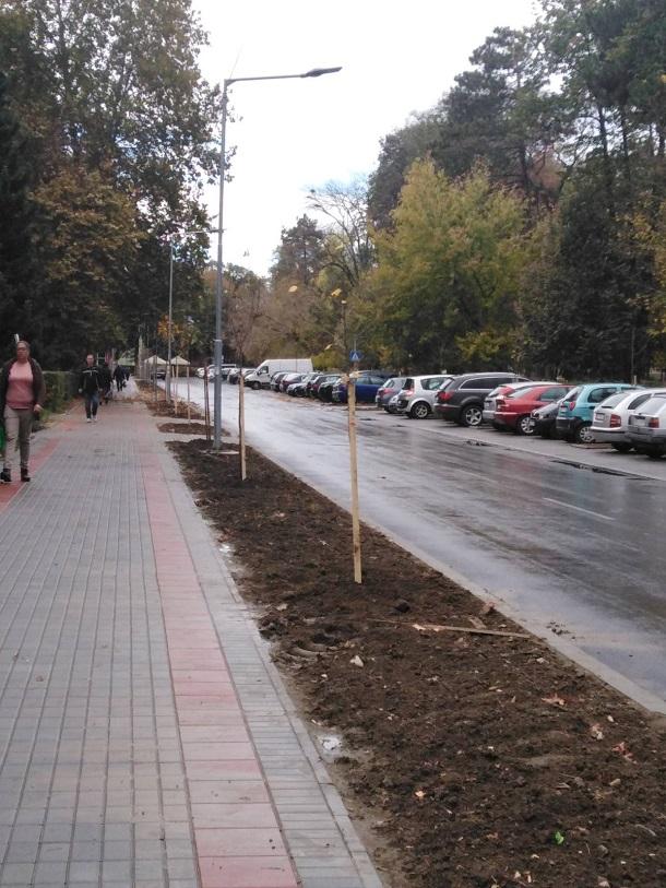Садња стабала у улици Веселина Миликића