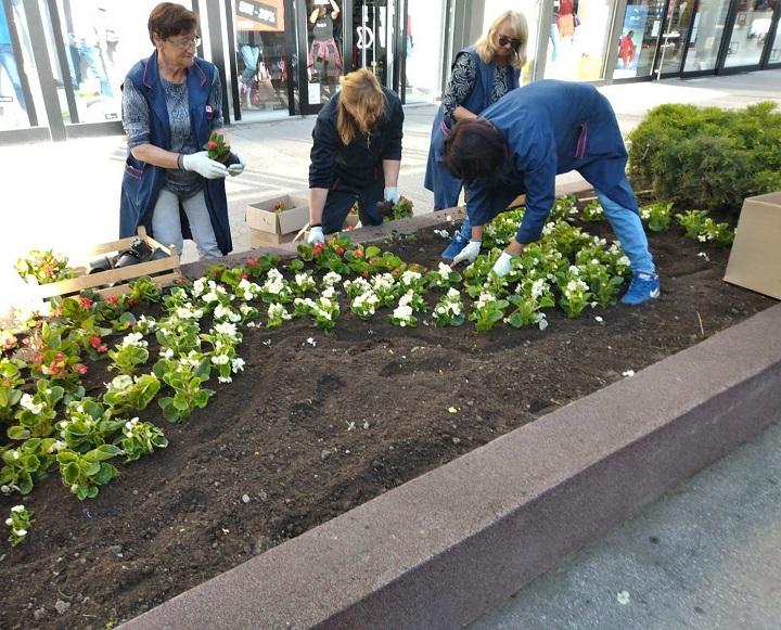 Садња цвећа у центру града